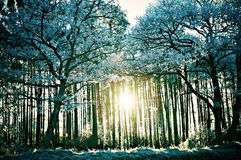 Frost Covered Forrest Scene Stock Photos