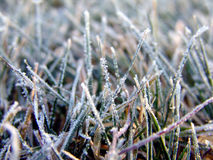 Frost covered grass Royalty Free Stock Images