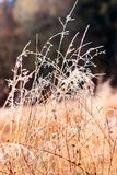 Frost covered grass in sun stock image