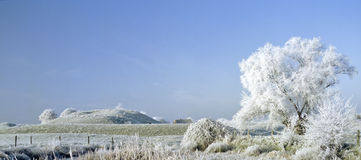 Frost covered landscape royalty free stock photo