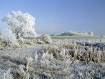 Frost covered landscape Stock Photography