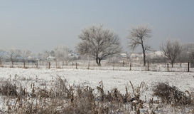 Frost covered landscape Royalty Free Stock Image