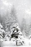 Frost covered pine trees in snow Royalty Free Stock Photos