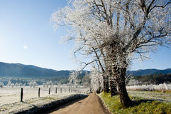 Frost covered road in Cades Cove. Stock Photography