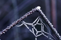 Frost covered spider net Royalty Free Stock Photo