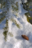 Frost Covered Spruce Tree Branch Stock Photos