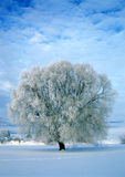 Frost Covered Tree. Thick frost covers this tree as it sits in the middle of a fresh blanket of snow in a field on a bitterly cold winter morning royalty free stock photography