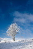 Frost covered tree Stock Image