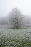 Frost Covered Tree Stock Photos