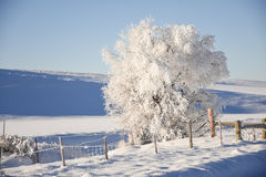 Frost Covered Tree By Fenceline. Winter Scene Royalty Free Stock Photos