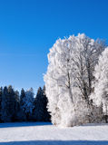 Frost covered trees Royalty Free Stock Photography