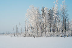 Frost covered trees Stock Image