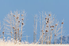 Frost covered trees Royalty Free Stock Images