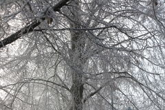 Frost Covered Trees stock photo