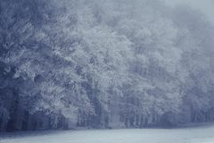Frost covered trees on a misty day Royalty Free Stock Photos