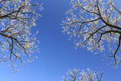 Frost covered trees, profiled on bright sky in winter. In a city park Royalty Free Stock Photography