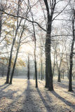 Frost covered trees, profiled on bright sky in winter. In a city park Stock Image