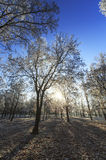 Frost covered trees, profiled on bright sky in winter. In a city park Royalty Free Stock Photos