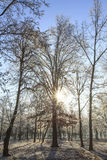 Frost covered trees, profiled on bright sky in winter. In a city park Stock Photos