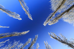 Frost covered trees, profiled on bright sky in winter Stock Images