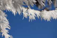 Frost covered twigs Royalty Free Stock Images