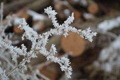 Frost covered twigs close up. Beautiful winter photo, closeup of frost on twigs stock photo