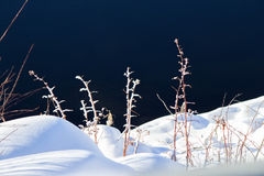 Frost covered vines in soft snow. By water Stock Photo