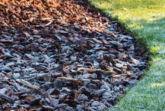 Frost covered wood chips in garden Stock Photo