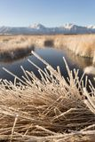 Frost covers dead winter grass in Owen`s Valley Sierra Nevada stock photography