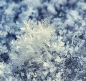 Frost crystals. Royalty Free Stock Image