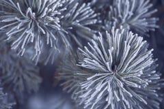Frost cubrió el árbol de pino Fotos de archivo libres de regalías