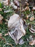 Frost cubrió las hojas en una mañana temprana del otoño Fotografía de archivo libre de regalías