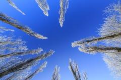 Frost cubrió los árboles, perfilados en el cielo brillante en invierno Imagen de archivo