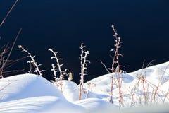 Frost cubrió vides en nieve suave Foto de archivo