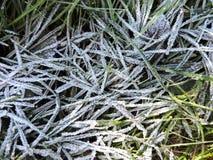 Frost dans l'herbe Images stock
