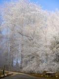 Frost dans la forêt des Alpes suisses Photographie stock libre de droits