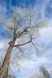 Frost deckte Bäume ab Lizenzfreie Stockfotos