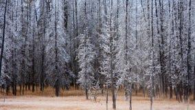 Frost deckte Bäume ab Lizenzfreies Stockfoto