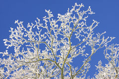 Frost deckte Baum ab Lizenzfreies Stockbild