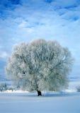 Frost deckte Baum ab Lizenzfreie Stockfotografie