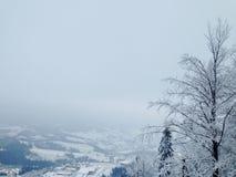 Frost in den Bergen machte einen magischen Wald Stockbild