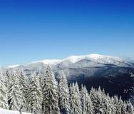 Frost in den Bergen machte einen magischen Wald Stockfotos