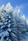 Frost in den Bergen machte einen magischen Wald Lizenzfreie Stockbilder