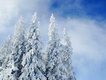 Frost in den Bergen machte einen magischen Wald Lizenzfreies Stockbild