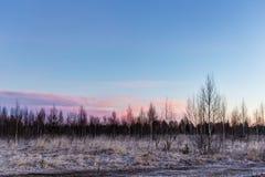 Frost des frühen Morgens Stockbilder