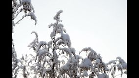 Frost on dry grass. stock footage