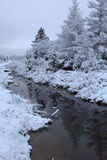 Frost, dunkelblauer Himmel Lizenzfreie Stockfotografie