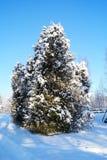 Frost, dunkelblauer Himmel Stockbilder