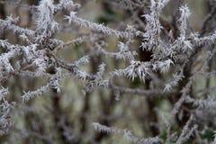 Frost durante invierno Imágenes de archivo libres de regalías