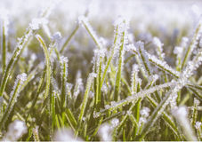 Frost effects on grass. Photo shows frost effects on grass Royalty Free Stock Photo